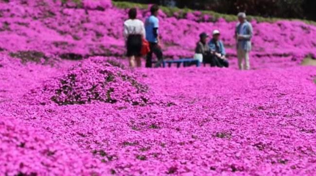 - Trong vài năm sau, căn nhà đã được bao phủ bởi một rừng hoa toả hương thơm ngát, thu hút khách du lịch đúng như dự tính của ông.
