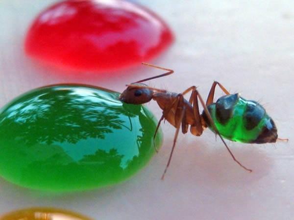 Những con kiến đổi màu -