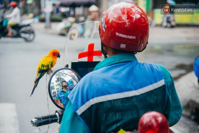 Ông cụ gần 70 tuổi, chú vẹt và chiếc xe cứu thương di động dễ thương ở Sài Gòn.