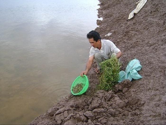 Việc đảm bảo môi trường nước trong sạch rất quan trọng đối với cua, nhất là nuôi mật độ dày, cho ăn thức ăn tươi sống.