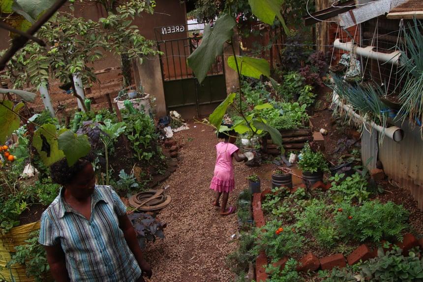 Khu vườn của Harriet Nakabaale tại quận Kawaala, Kampala là một địa chỉ quen thuộc cho những người địa phương muốn đến tham quan, học hỏi cách thức trồng rau củ tại các không gian đô thị (Ảnh Nils Adler).