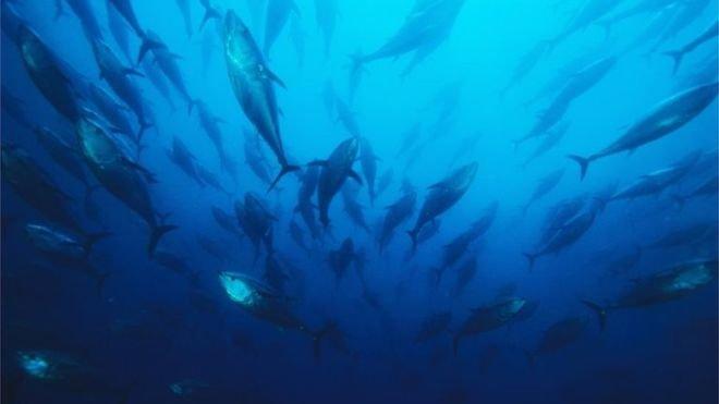 Hành vi lợi dụng việc điều tra, đánh giá nguồn lợi thủy sản làm ảnh hưởng đến quyền, lợi ích hợp pháp của tổ chức, cá nhân khác; cung cấp, khai thác thông tin, sử dụng thông tin, dữ liệu về nguồn lợi thủy sản cũng được dự thảo đưa vào với mức phạt đề xuất từ 30 – 50 triệu đồng.