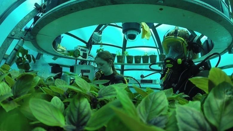 Thử nghiệm thú vị: Trồng rau dưới đáy biển