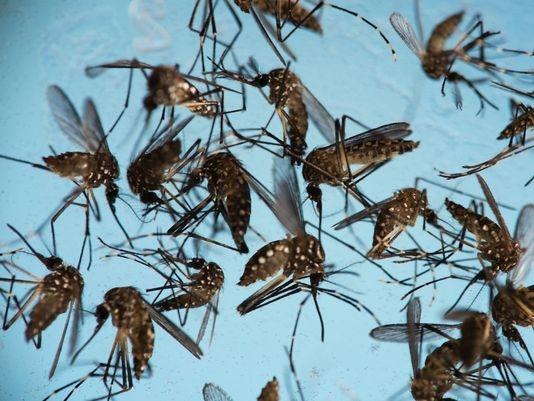 Sơn Kansai sẽ khiến hệ thần kinh trung ương của muỗi tê liệt và muỗi sẽ...lăn quay ra nhà.