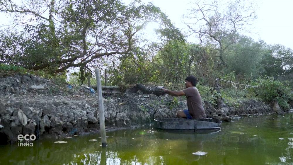 Anh Vinayak Koli học theo tri thức người xưa, trồng đước xung quanh hồ để làm những chiếc máy lọc sinh thái lọc nước cho hồ nuôi cá của mình.