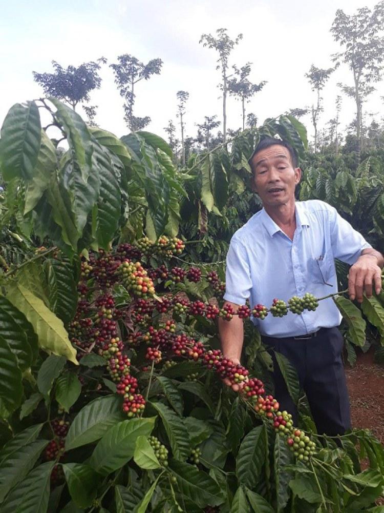 Quê hương của ông Thao, xã Hua La là vùng trồng cà phê có tiếng của tỉnh Sơn La. Chính sự vất vả của gia đình và bà con làng xóm trong việc sơ chế cà phê đã thôi thúc ông sáng chế ra máy bóc vỏ cà phê tiện lợi.