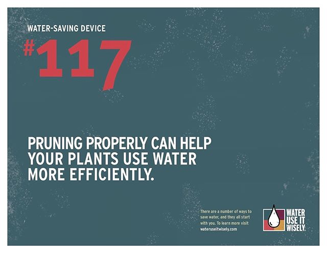 Prune your plants to keep them fresh, healthy & help them use less H2O! @wateruseitwiselyaz #WaterMatters