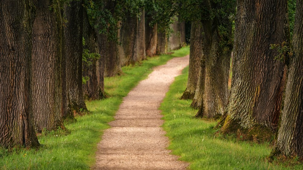 counseling path.jpg