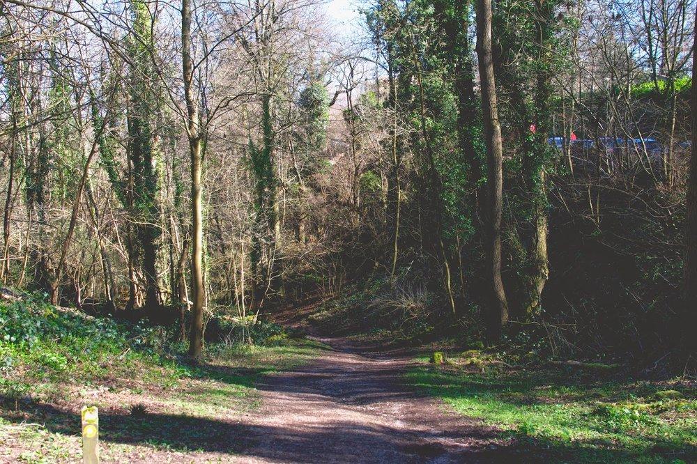leigh woods bristol family walk