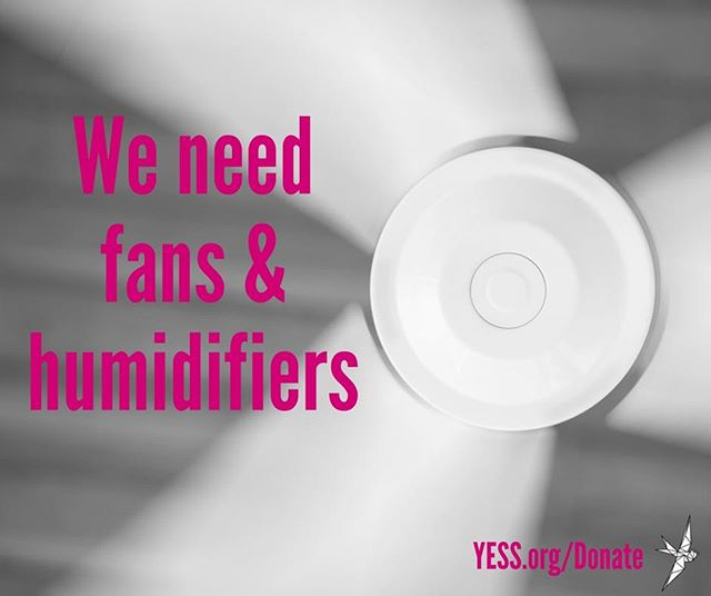 We are looking for a few fans and humidifiers for youth in our residential programs! New or gently used are totally fine--help our youth be comfortable, healthy, and well-rested.  We are happy to take donations at our Whyte Avenue facility, located at 9310 82 Avenue, Edmonton, between the hours of 9AM-4:30PM, Monday to Friday. After-hours in-kind donations can be dropped off in the white metal bins at the back of our Whyte Ave building.  For more information about dropping off donations visit YESS.org/Donate #yessorg #yessishome #yeggives