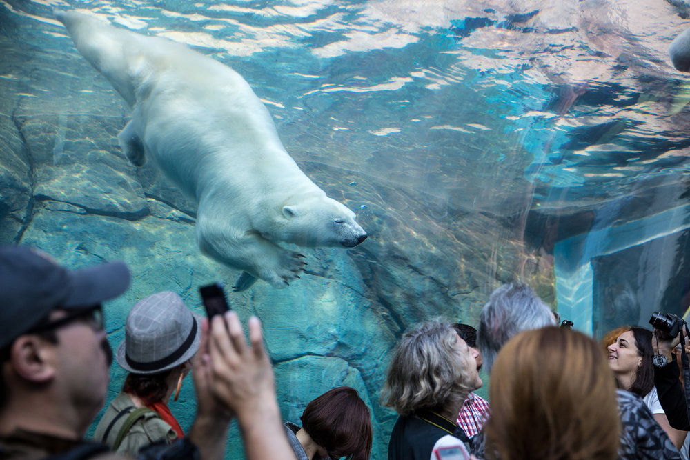 The Journey to Churchill exhibit is a popular attraction at the Assiniboine Park Zoo