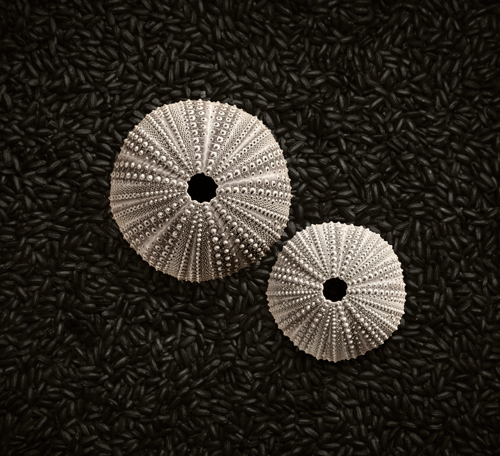 """Sea Urchins"" by Gregg McGough"