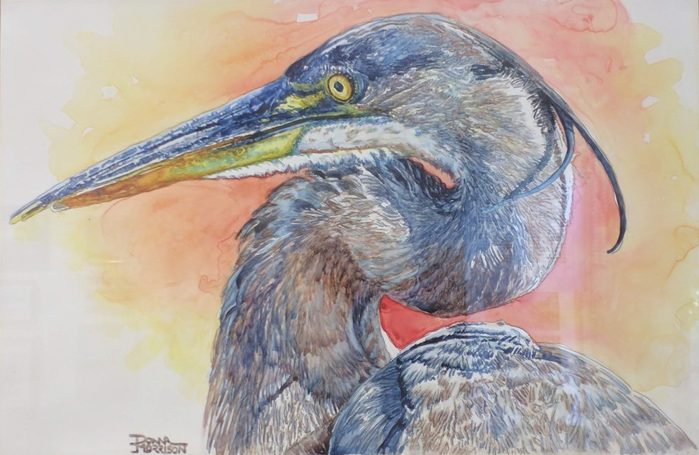 2nd_Donna Morrison_Great Blue Close Up_WC.jpg