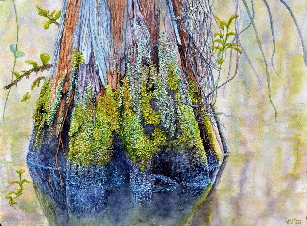 evergladecypressswamp.jpg
