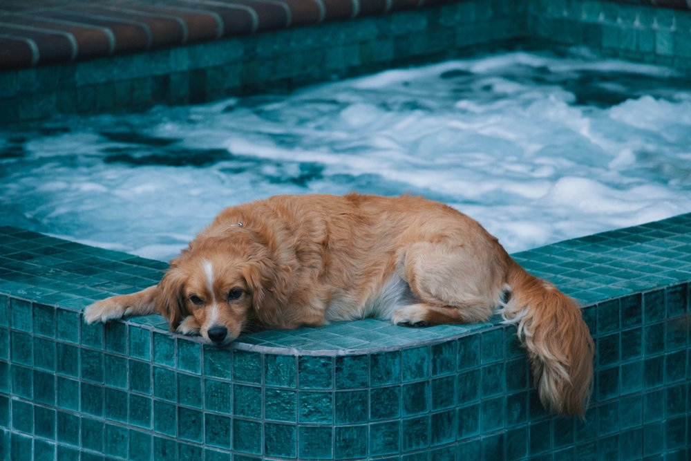 Dog laying by a pool.