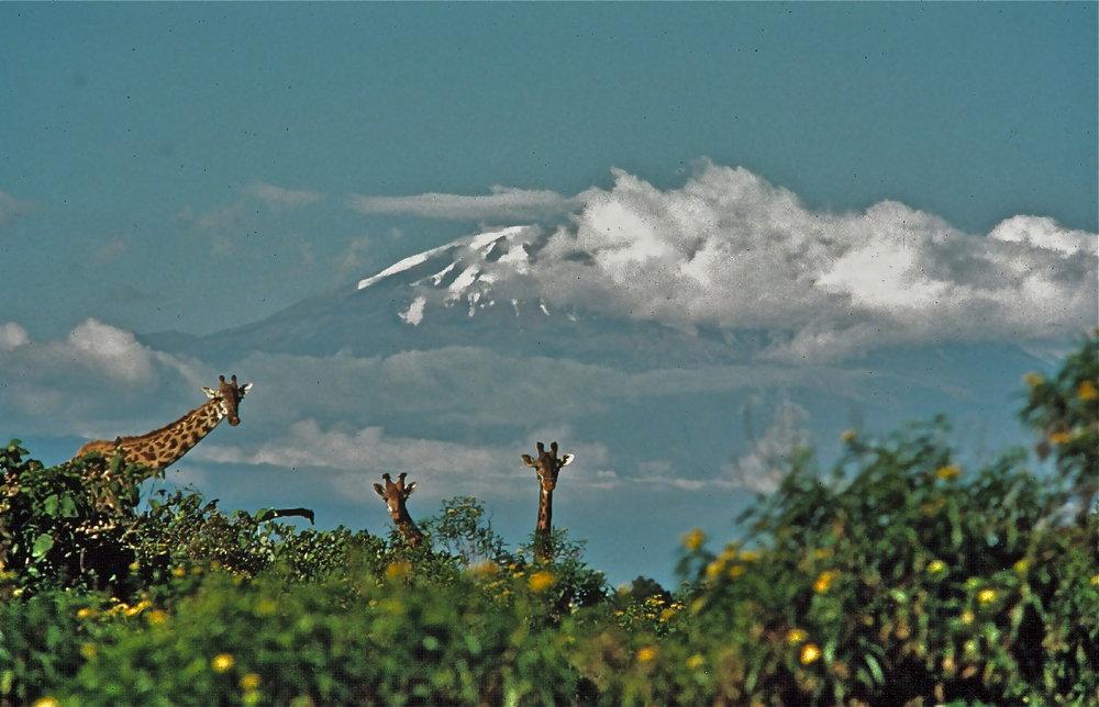 Kilimanjaro copy.jpg
