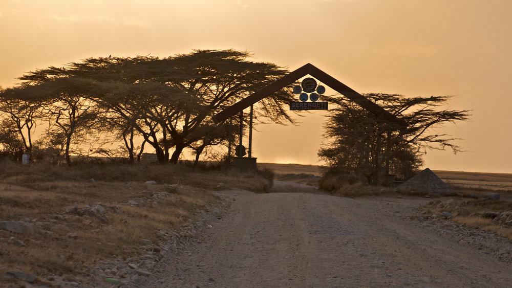 Ndutu safari Tanzania 2013 31.jpg