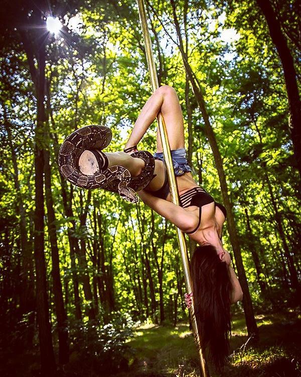 Snake on pole