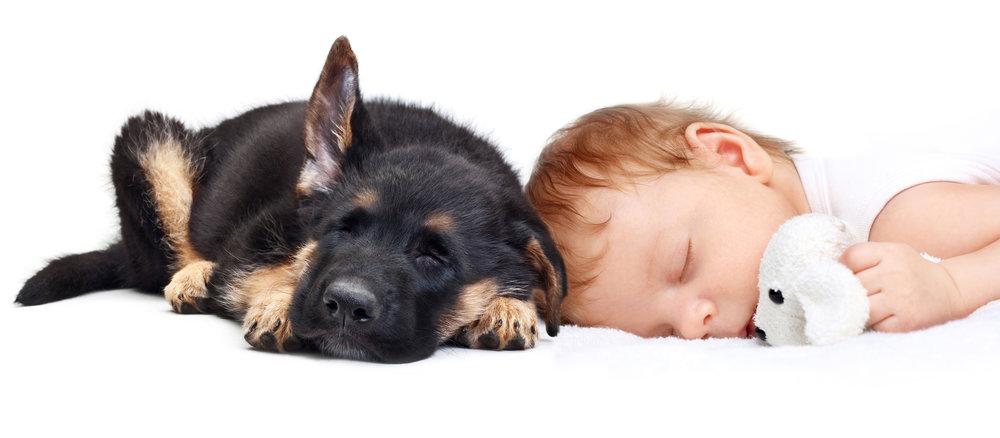 bigstock-Sleeping-Baby-Boy-with-toy-dog-52604098.jpg