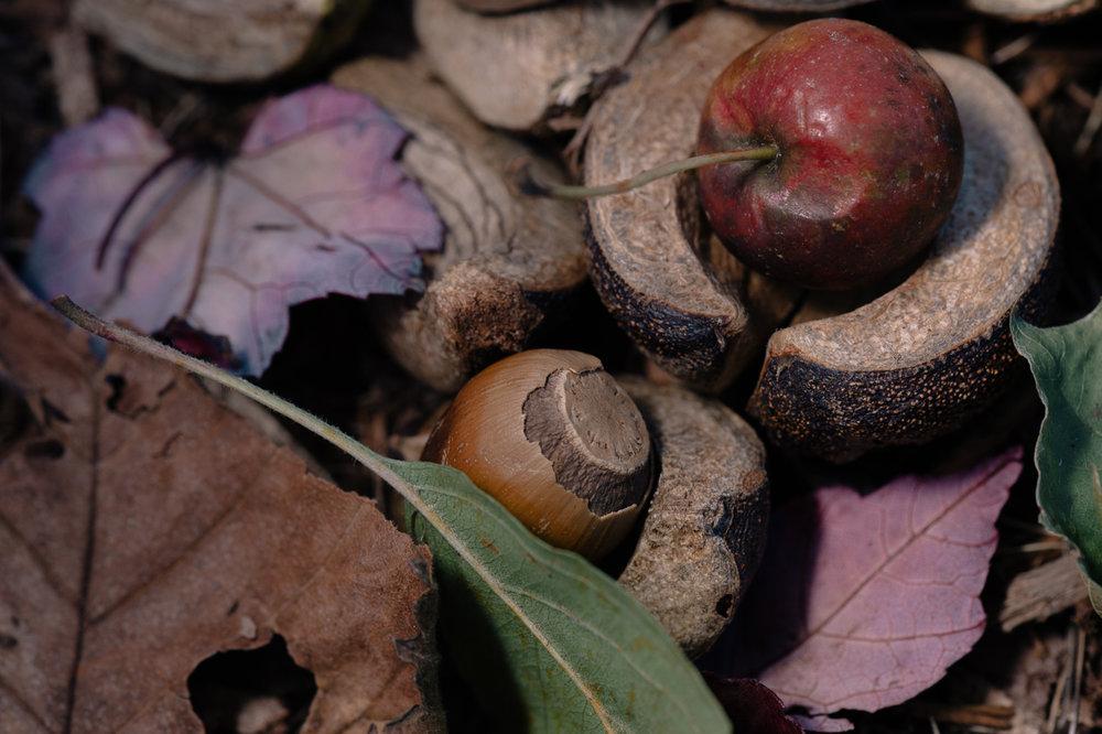 autumn macro-8.jpg