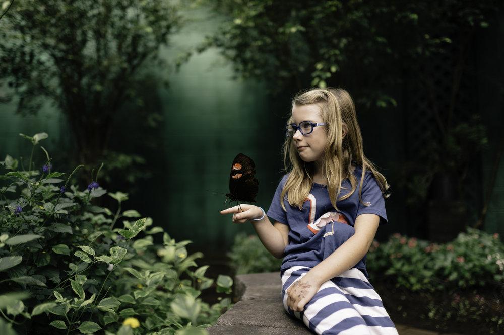 paisley butterfly.jpg