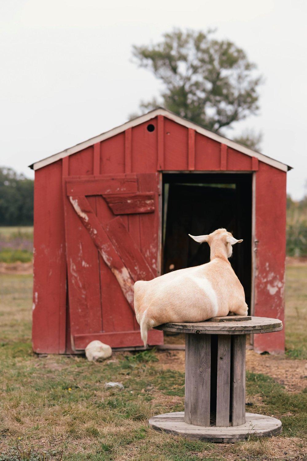 colby farm-2.jpg