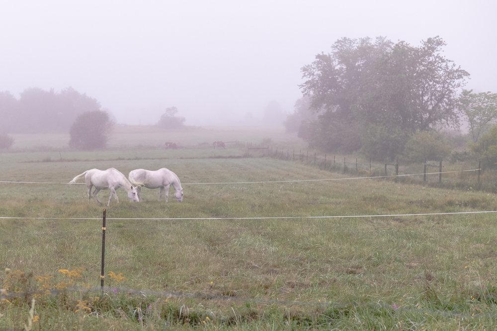 horses essex-3.jpg