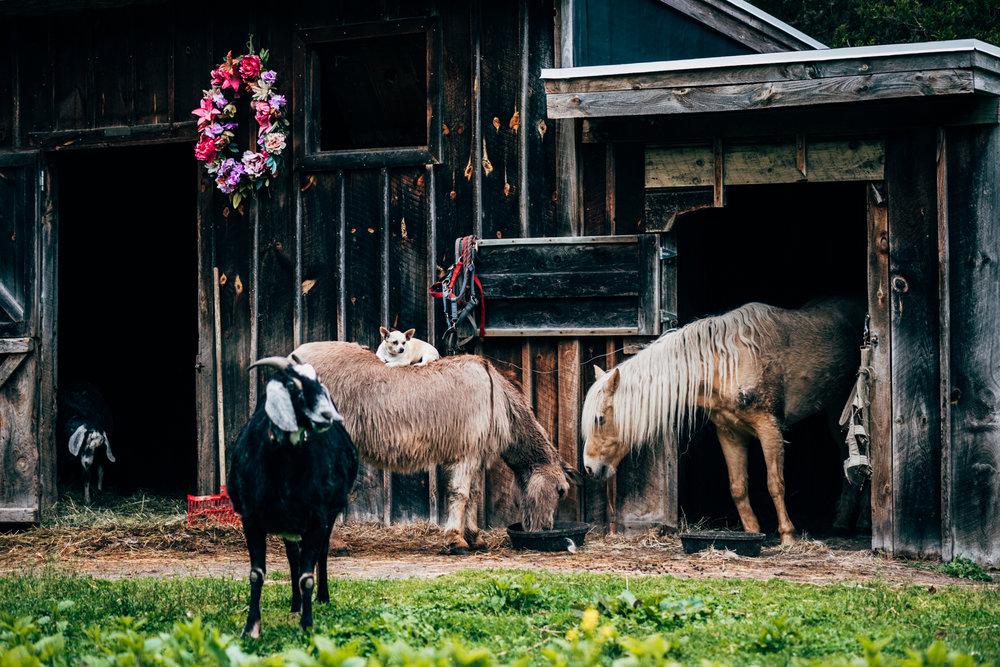 dog on donkey-6.jpg