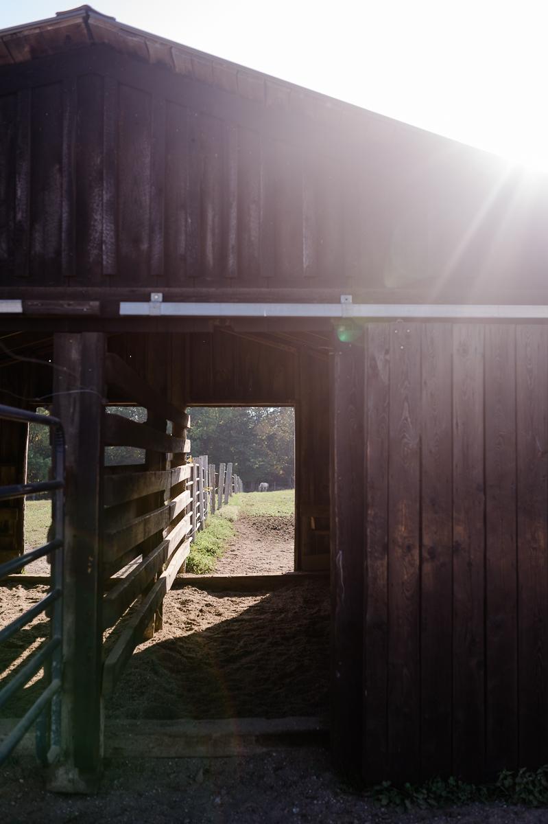 meg horses-10.jpg
