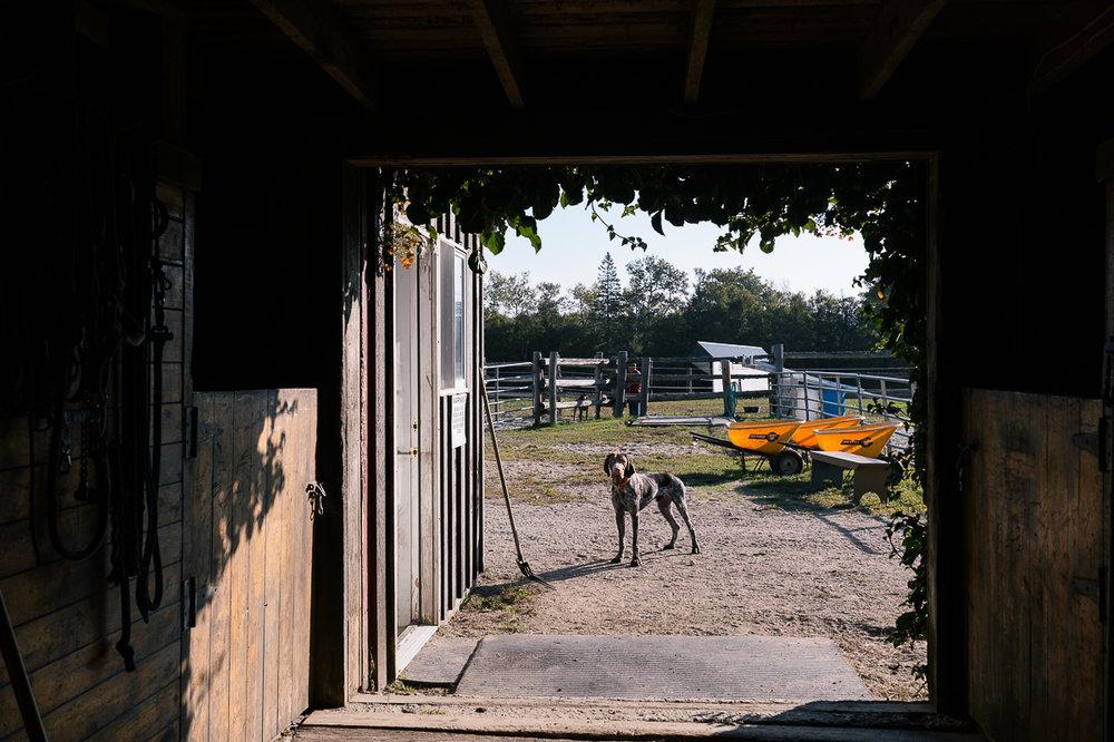 meg horses-2.jpg