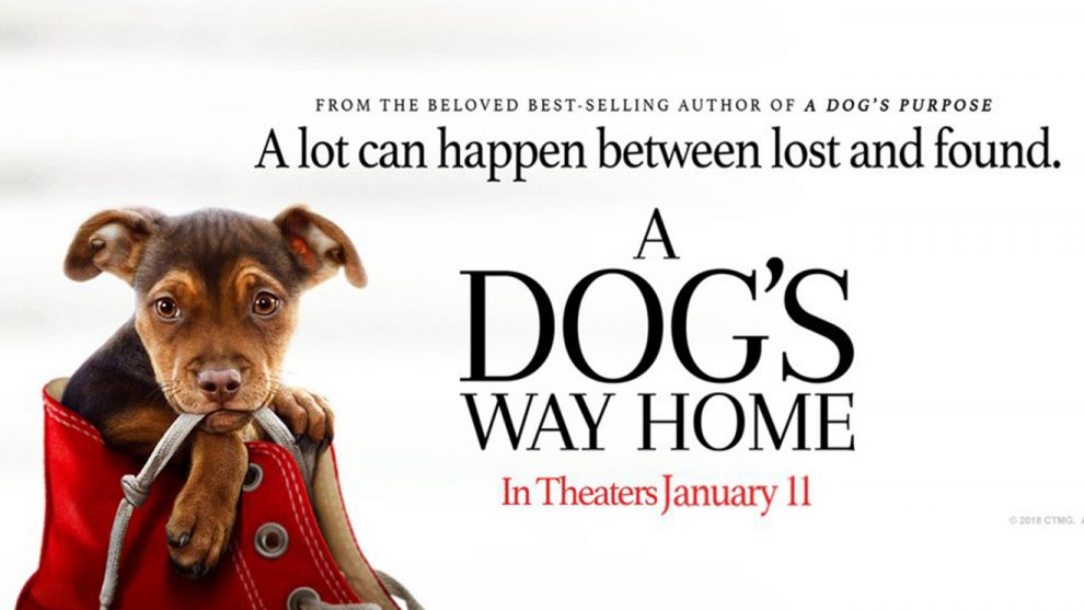 a dog's way home.jpg