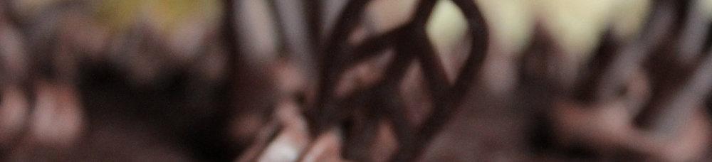 Chocolate & Cacao -