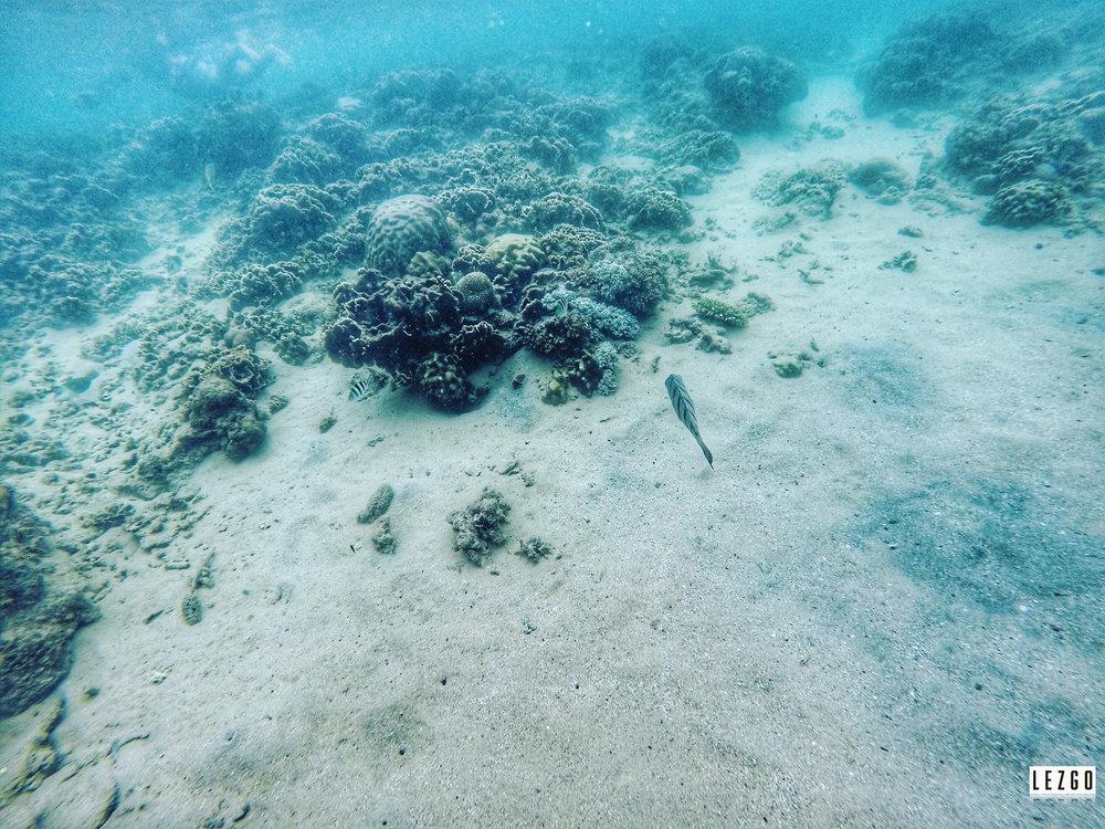Snorkeling Ao Leuk Bay, Koh Tao, Thailand June 2017