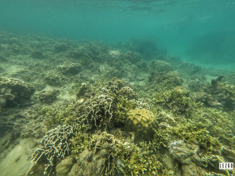 Snorkeling Ao Tanot Bay, Koh Tao, Thailand June 2017