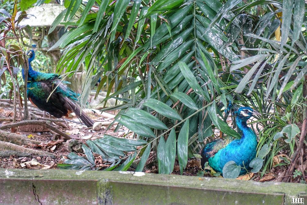 Bird Park, Kuala Lumpur, Malaysia July 2017