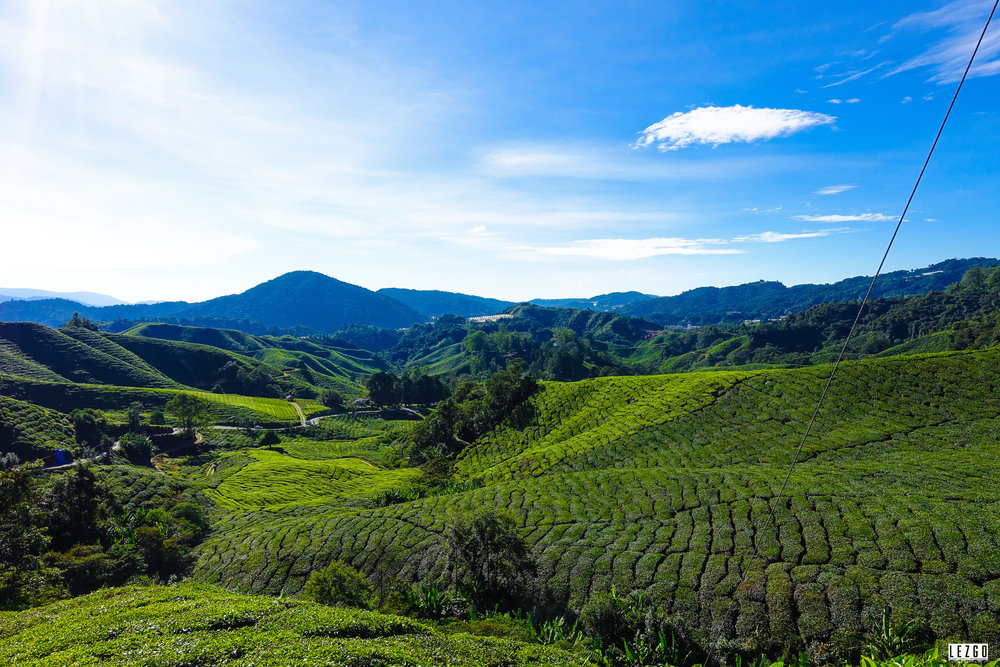 Tea Plantation near Cameron Highlands, MalJuly 2017