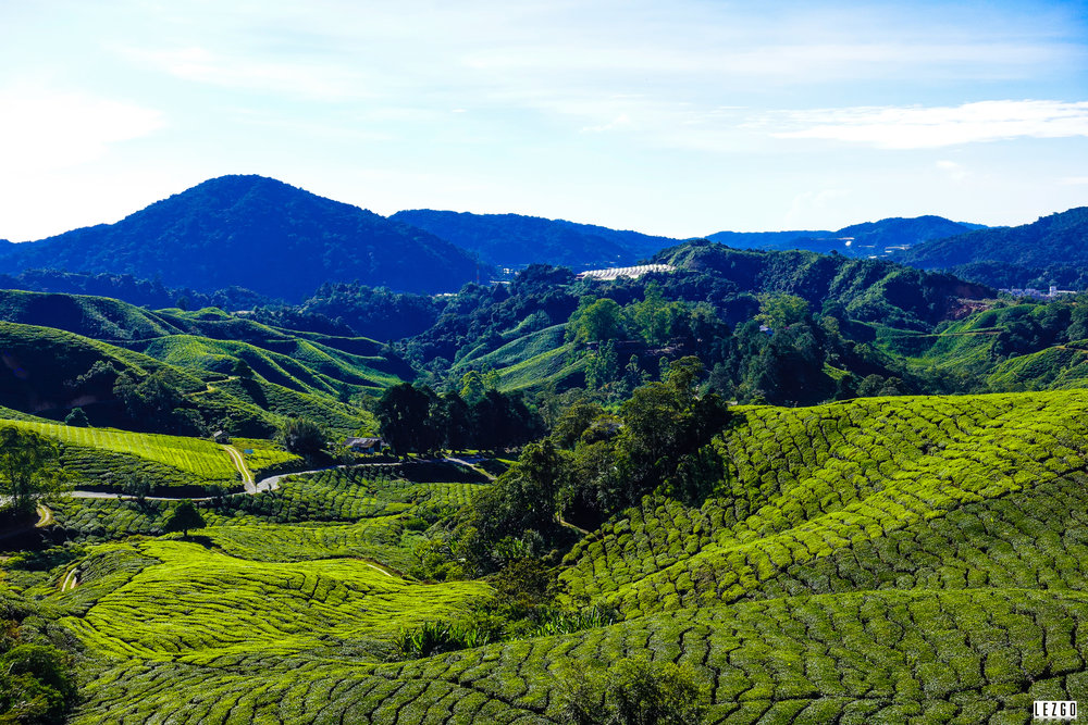 Tea Plantation near Cameron Highlands, Malaysia July 2017