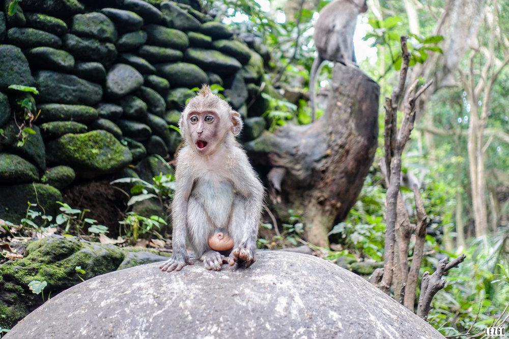 Sacred Monkey Forest,Ubud, Bali, Indonesia 2017