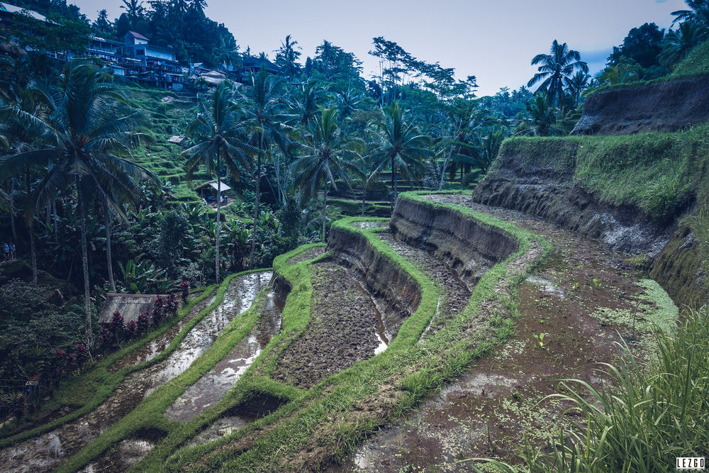 Tegallalang Rice Terraces, Ubud, Bali, Indonesia July 2017