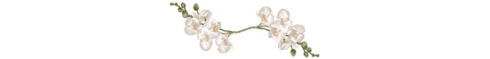 Divider-white-flower.png