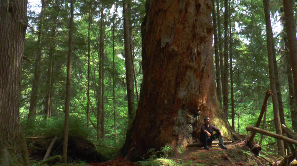 Haida forester Ralph Stocker reflects on his hopes for the future, in the final chapter of the film.