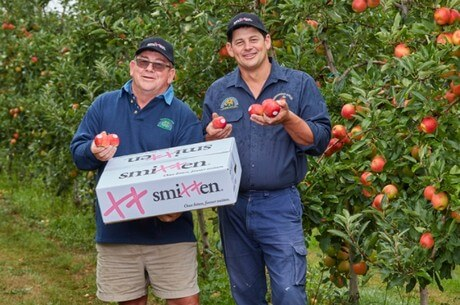 Brad and Glynn Fankhauser, of Fankhauser Apples, with new season Smitten® apples.