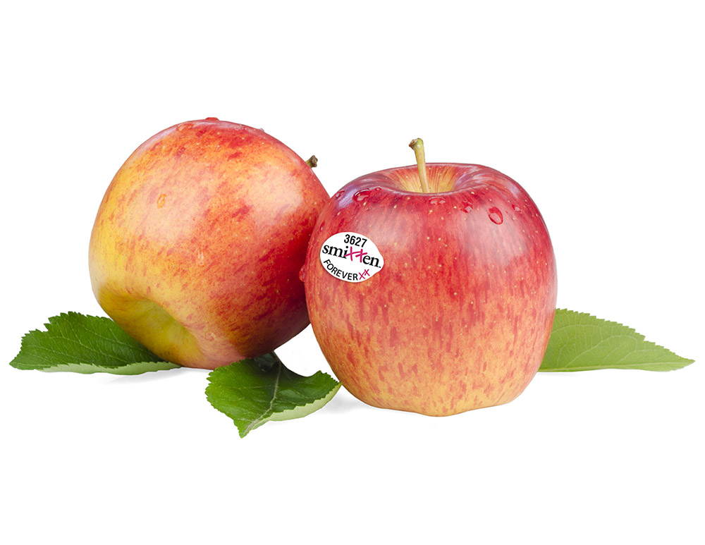 Smitten apples are average with a bi-color outer skin.