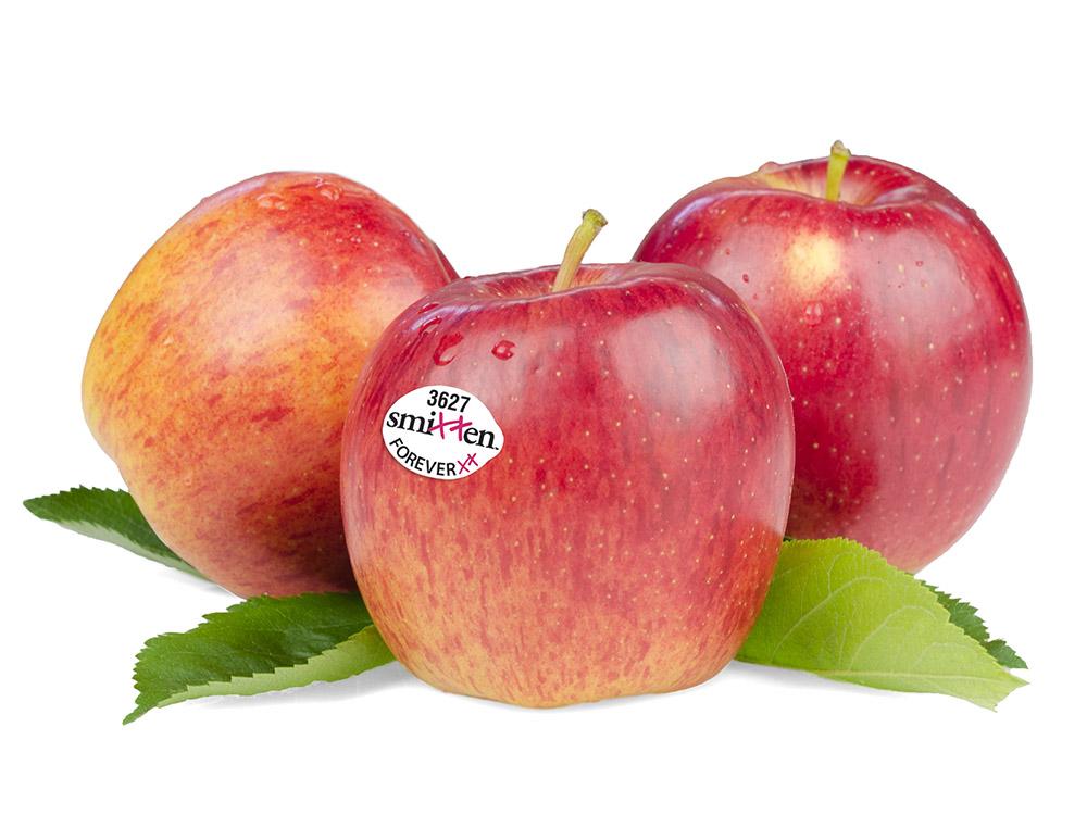 Smitten-Apples-Group-1.jpg