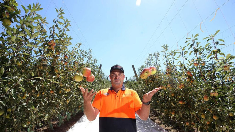 Narre Warren orchard manager Shaun Witchell with Smitten apples. Picture by Turi Kouzmin.