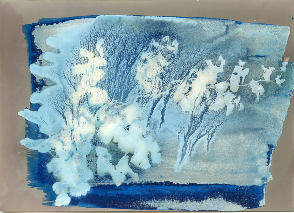 My Japanese Garden Cyano-lumen   Photogram lumen on photographic paper treated with cyanotype emulsion