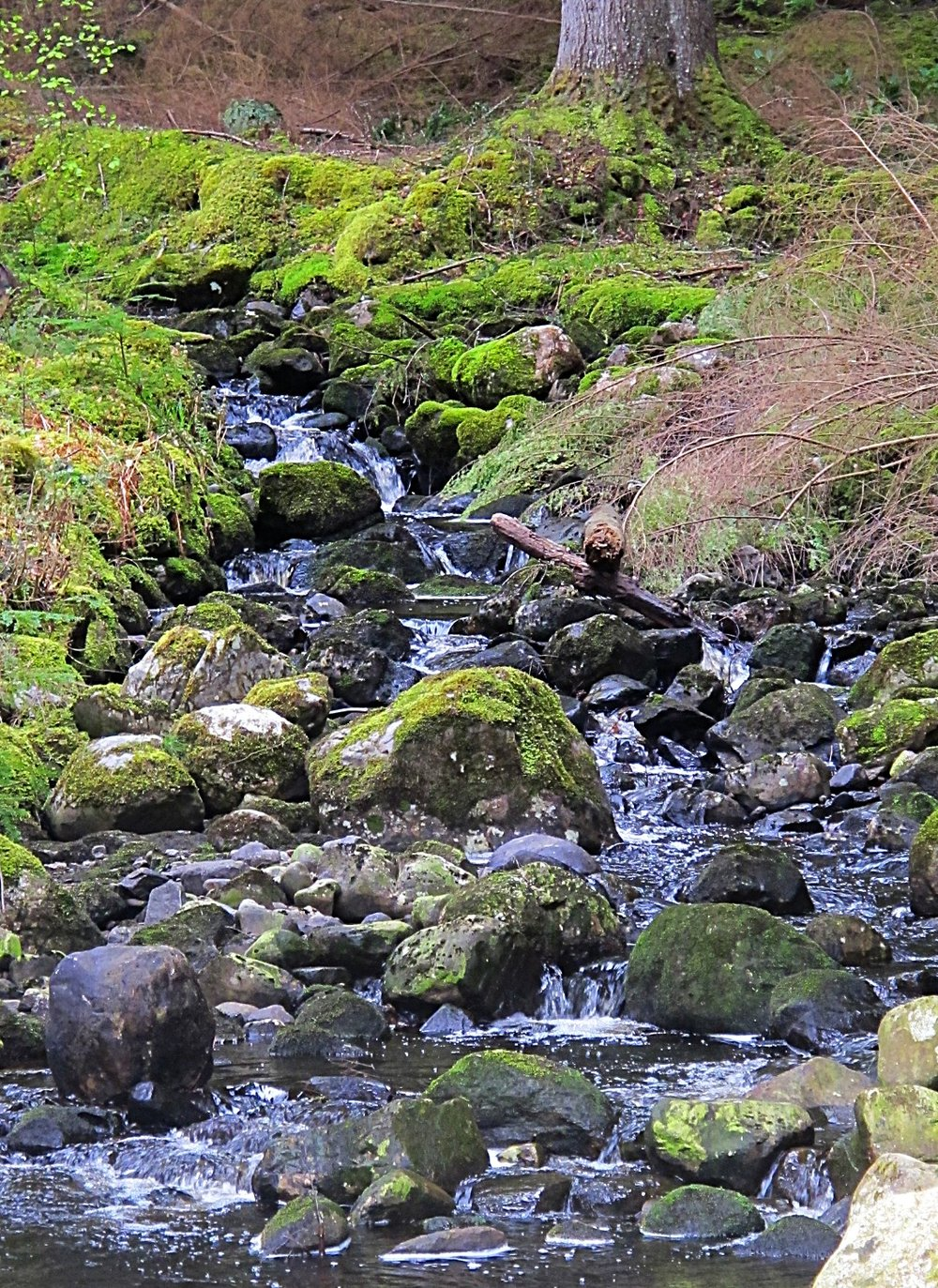 ardverikie stream.jpg