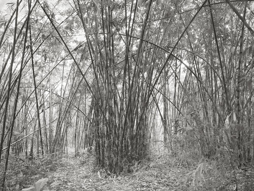 Bamboo, Bali - 2010 copy.jpg