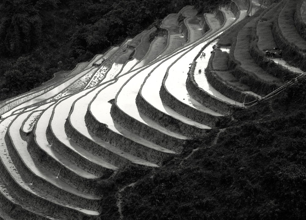 Terraced-Rice-Fields-1995.jpg