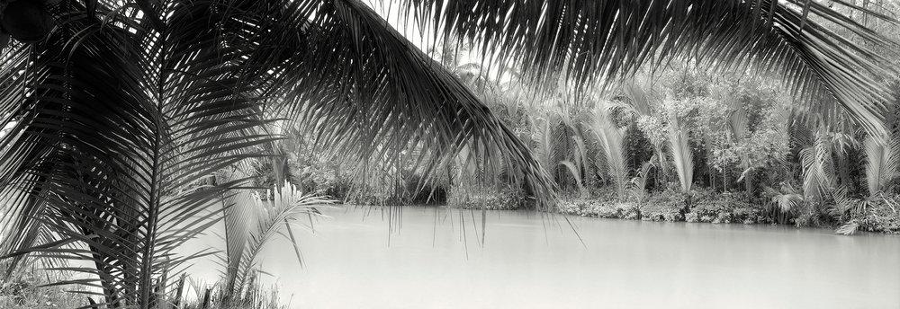 Mo-Cai-Mangroves.jpg